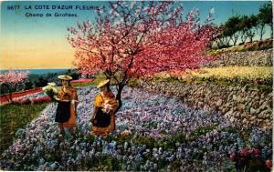 CPA La Cote d'Azur Fleurie Champ de Giroflees (376403)