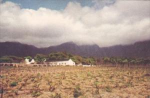South Africa Cape Town A Vineyard Fransch Hoek Valley