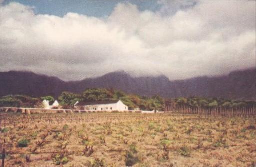 South Africa Cape Town A Vineyard Fransch Hoek Valley