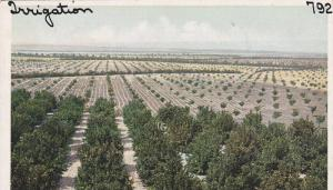 Irrigating a Lemon Orchard, California, 10-20s