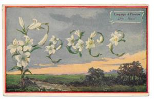 Language of Flowers Lily Peace Vintage Postcard