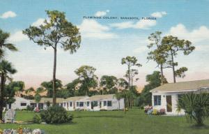 SARASOTA , Florida , 30-40s ; Flamingo Colony