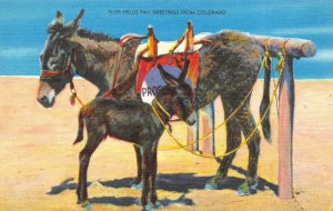 Vintage Linen c1930-45 USA Postcard Donkey's Greetings from Colorado 38Z