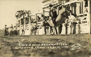 Cheyenne, Wyoming, Frontier Days, Ridin a Wild Brahma Steer (1935) Denver RPPC