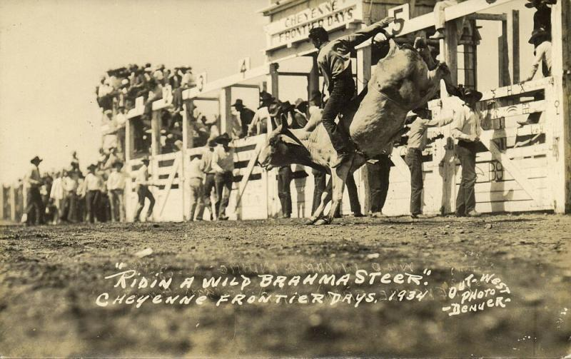 Cheyenne, Wyoming, Frontier Days, Ridin a Wild Brahma Steer (1935) Denver RPPC