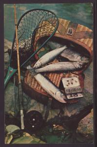 Trout,Fishing BIN