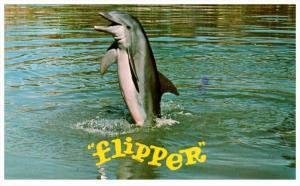 3904   FL Miami   FLIPPER Tail Walking at Seaaquaium