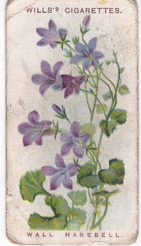 Cigarette Cards Wills Alpine Flowers No 10 Wall Harebell