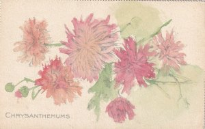 Pink Chrysanthemums, 1900-10s, TUCK #2550