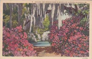 Georgia Savannah Azaleas And Spanish Moss In Wormsloe Gardens 1942