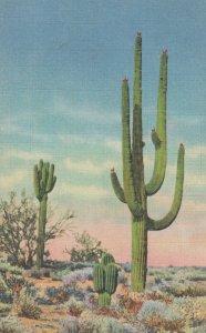 Giant Sahuaro , Bisnaga & Palo Verde , 1930-40s