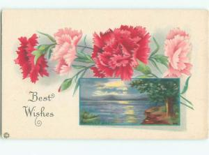 Divided-Back BEAUTIFUL FLOWERS SCENE Great Postcard AA2482