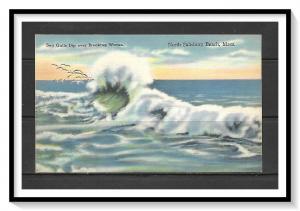 Massachusetts, North Salisbury Beach - Sea Gulls - Breaking Waves