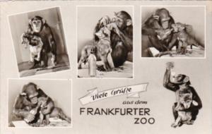 Germany Frankfurt Viele Gruesse Aus Dem Frankfurter Zoo Photo