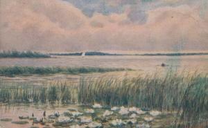 Hickling Broad Norfolk Water Lily Sailing Antique Portrait Postcard