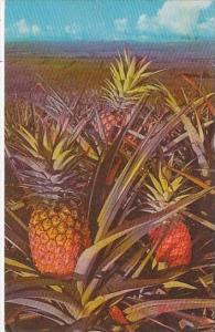 Hawaii  Honolulu Pineapple 1970