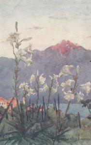 LOCARNO , Ticino , Switzerland , 00-10s ; Flowers ; TUCK 7105