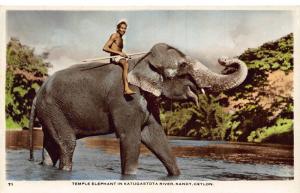 Ceylon Temple Elephant in Katugastota River Kandy Postcard