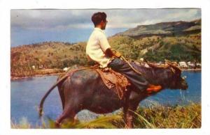 Guam, 40-60s : Native Carabao
