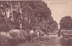 BERRE-LES-ALPES, France, 00-10s; Route de la Foret de la Cene, donkey