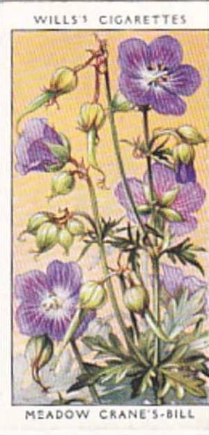 Wills Vintage Cigarette Card Wild Flowers 1936 1st Series No 11 Meadow Crane'...
