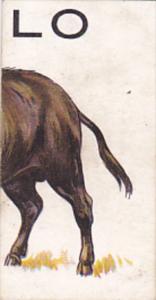 Cigarette Card Wills 1934 Animalloys No 12 LO of BUFFALO