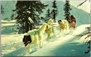 Vintage Alaska Postcard DOG SLED in the Arctic at 56 Below Zero c1960s Chrome