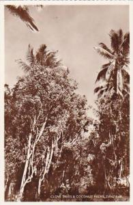 Tanzania Zanzibar Clove Trees & Coconut Palms Real Photo