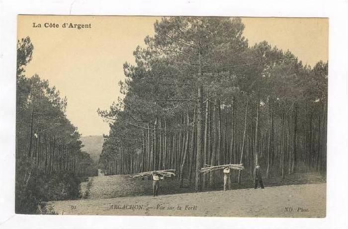Vue Sur La Foret, Arcachon (Gironde), France, 1900-1910s