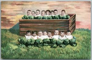 MULTIPLE BABIES in the CABBAGE FIELD ANTIQUE POSTCARD