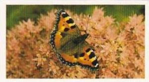 Grandee Vintage Cigarette Card British Butterflies 1984 No 10 Small Tortoises...
