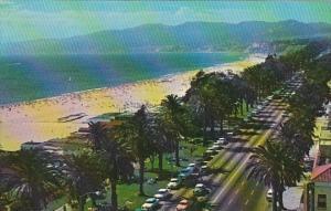 California Santa Monica Aerial View Of Palm Lined Palisade Park