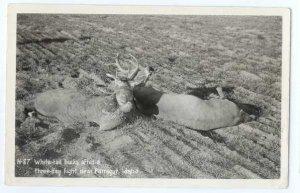RPPC, White Tail Bucks after a Three Day Fight near Farragut, Idaho, ID, Kodak P