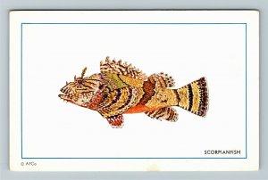 Miami FL- Florida, Scorpianfish, Authentic Florida Fishes, Chrome Postcard
