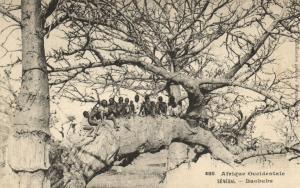 CPA Sénégal Afrique 488. Dakar - Fortier - Baobabs (70301)