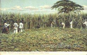 Harvesting Sugar Can Regogiendo Cana Cuba, Republica De Cuba Unused