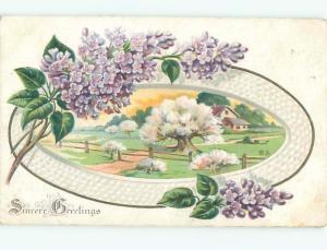 Divided-Back BEAUTIFUL FLOWERS SCENE Great Postcard AA2890