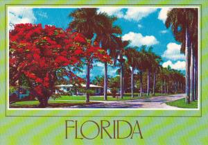 Florida Flowers Stately Royal Palms and Royal Poinciana Tree