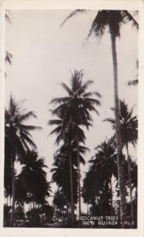 New Guinea Cocoanut Trees Real Photo
