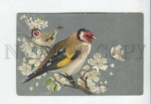 3176773 EMBOSSED Birds on Apple Tree Vintage Colorful postcard
