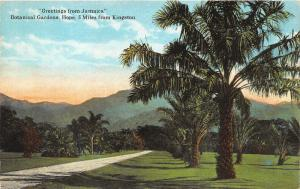 Hope Jamaica~Near Kingston~Botanical Gardens~Palm Trees~c1910 Pc