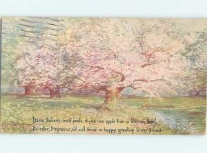 1921 signed BEAUTIFUL PINK FLOWERING TREES HL6338