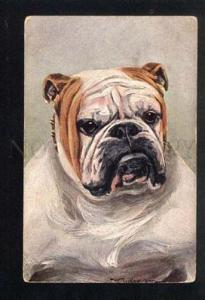 038226 Portrait of English BULLDOG. Vintage T.S.N PC