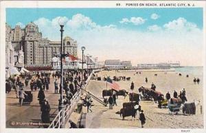 New Jersey Atlantic City Ponies On Beach
