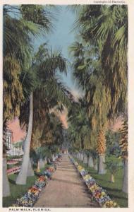 Florida Beautiful Palm Walk Curteich