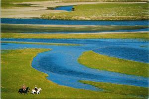Horses Song of Grassland Sichuan China Hai Feng Pub Unused Postcard F6