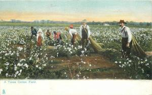 C-1910 Texas Cotton Field undivided Tuck postcard 9841