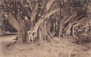 Vue Dans Le Jardin d'Essai, Alger, Algeria, Africa, 1900-1910s