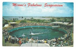 Miamis Fabulous Seaquarium Cha Cha Porpoises 1969 Postcard Photo Larry Witt