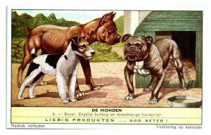Boxer English Bulldog Wire-Haired Terrier Dog Breeds Liebig Belgian Trade Card